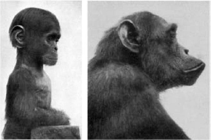 Самое грандиозное шоу на Земле: доказательства эволюции