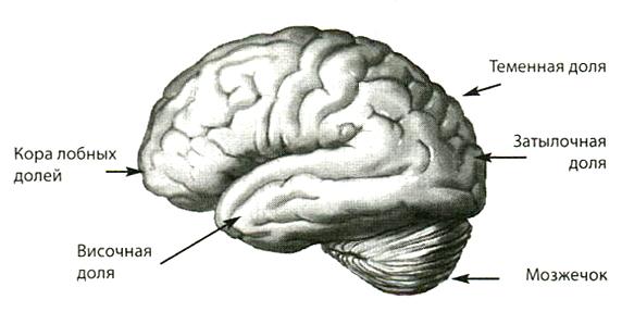 Самое сексуальная часть у мужчины это мозг