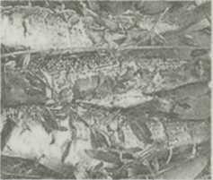 Рыба — царица стола
