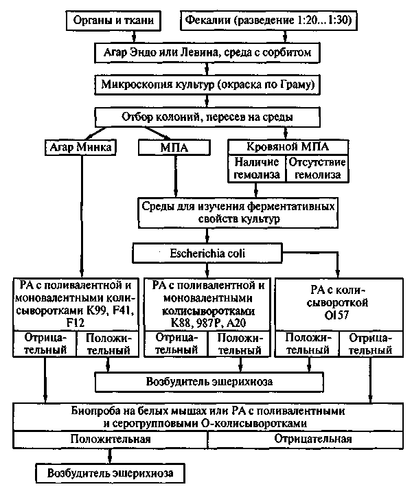 Птицы систематика схема