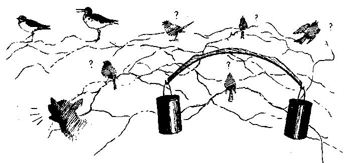 Шесть дней в лесах
