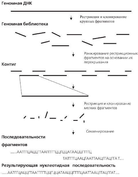 Геном человека: Энциклопедия