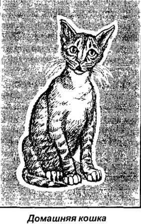Сгруппироваться результате мягко приземляется кошек влечет окну сексуальное чувство многие