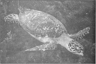 100 великих рекордов живой природы