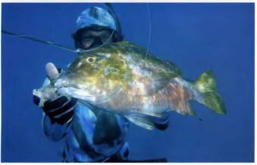 Безопасность Рыба ценою жизни подводная охота для начинающих статьи читать