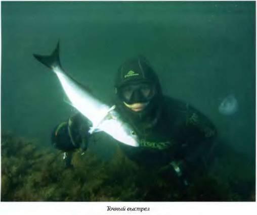 Аксессуары для подводной охоты » Азбука снаряжения подводного охотника