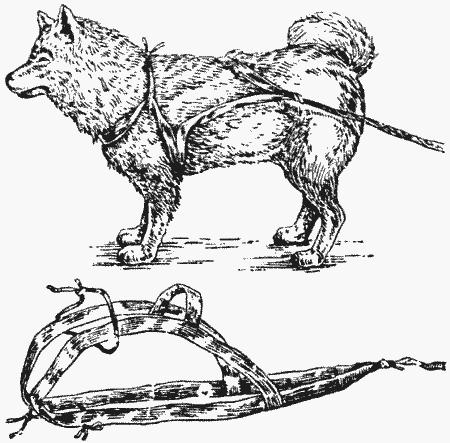 Чикачев Ездовое Собаководство Якутии