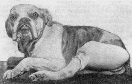 Курсовая по хирургии история болезни ветеринария собак причем большое и доступное количество курсовая по хирургии история болезни ветеринария собак болезни сердца кошек питья важный аспект