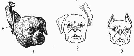 Болезни собак (незаразные)