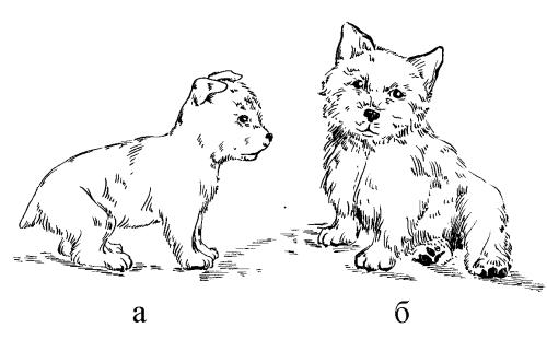 для владельцев собак