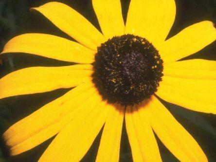 Замена цветов на изображении
