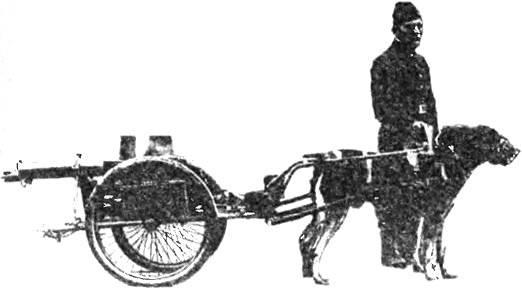 Пулемет, перевозимый собачьей