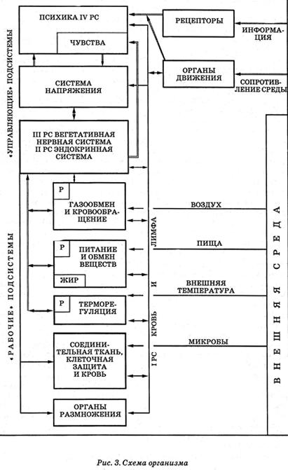 Первая регулирующая система (I