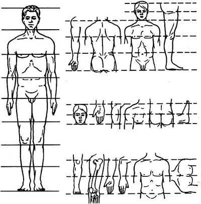 Отношение пропорций человека
