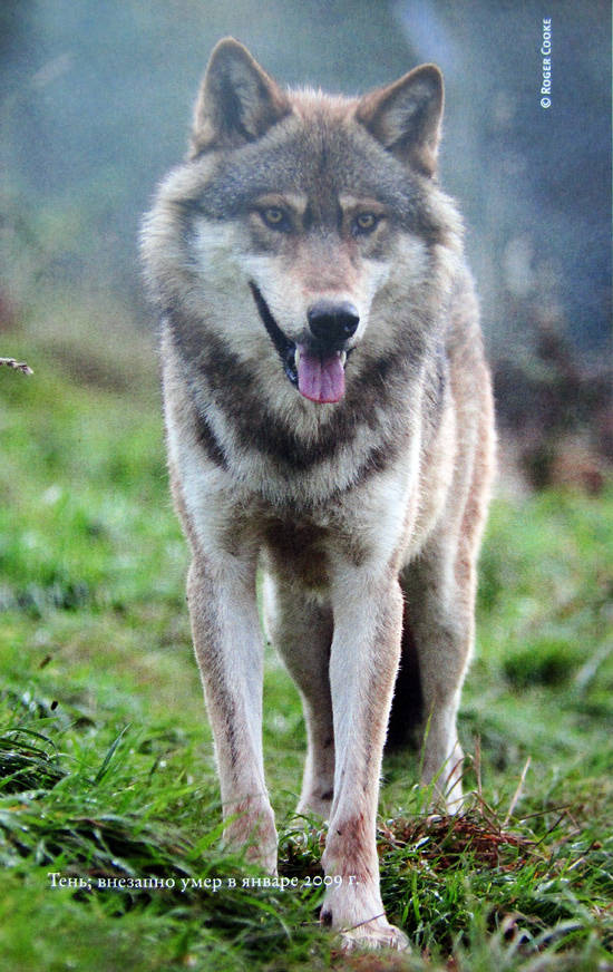 Смотрите смотрите внимательно о волки скачать fb2