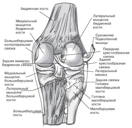 Изображение - Капсула сустава колена 1012008-doc2fb_image_02000007