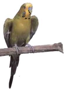 как попугаи летает фото 2