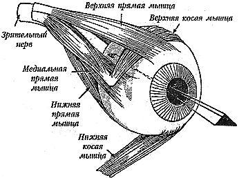 Улучшите ваше зрение
