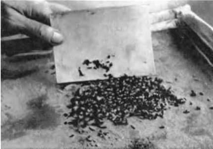 Операция «Лесные муравьи»