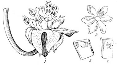 Происхождение растений