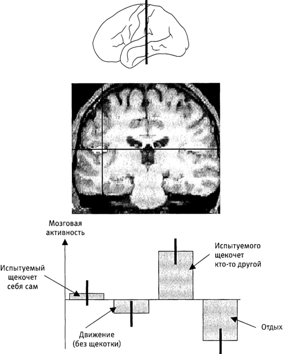Книга Мозг и душа. Как нервная деятельность формирует наш внутренний мир