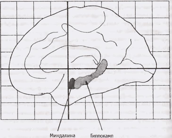 Шизофрения: краткое введение