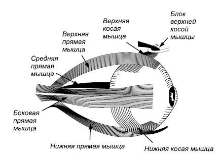 мангустин южно сахалинск