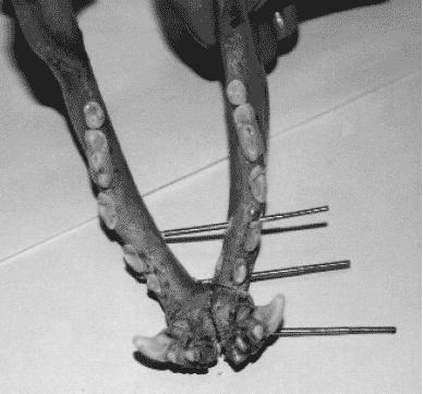Стоматология собак
