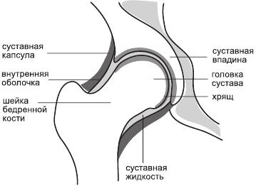 Строение и функции сустава как можно вылечить деформирующий артрит суставов пальцев руки