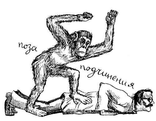 Поведение животных