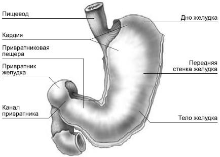 очищение желудка и кишечника в домашних условиях
