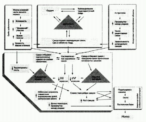 Эволюция человека том 1: Обезьяны кости и гены 2011