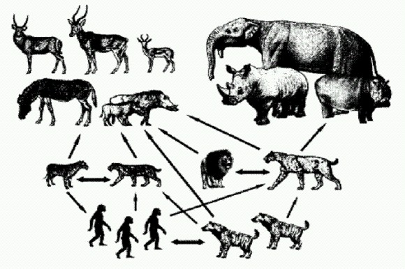 Книга: Эволюция человека том