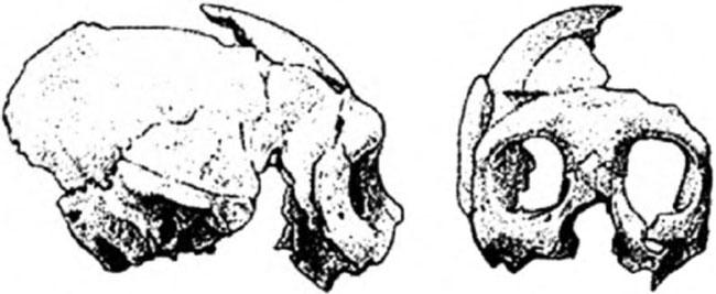 Неандертальцы история