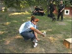 Игры дрессировать собак
