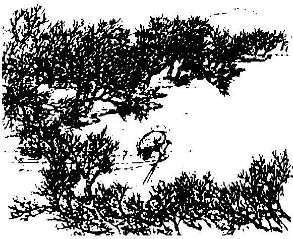Река Ванчуань