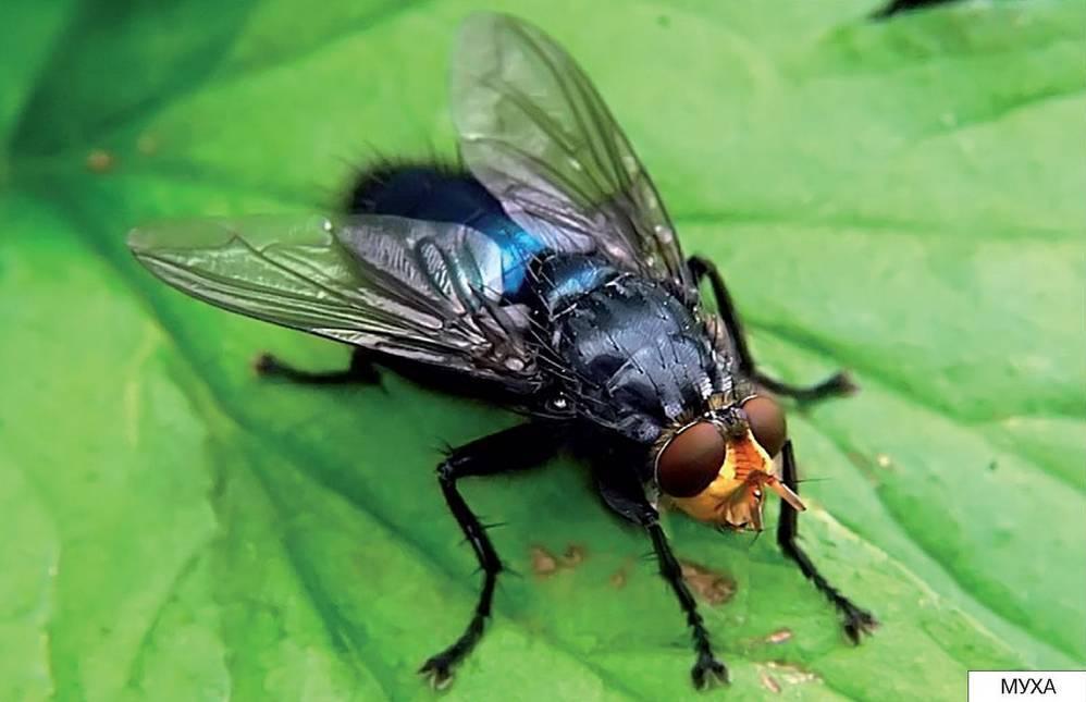 Картинки насекомых летом для детей
