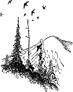 Муравей-путешественник