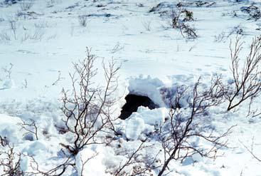 Как нарисовать медведя в берлоге зимой картинки