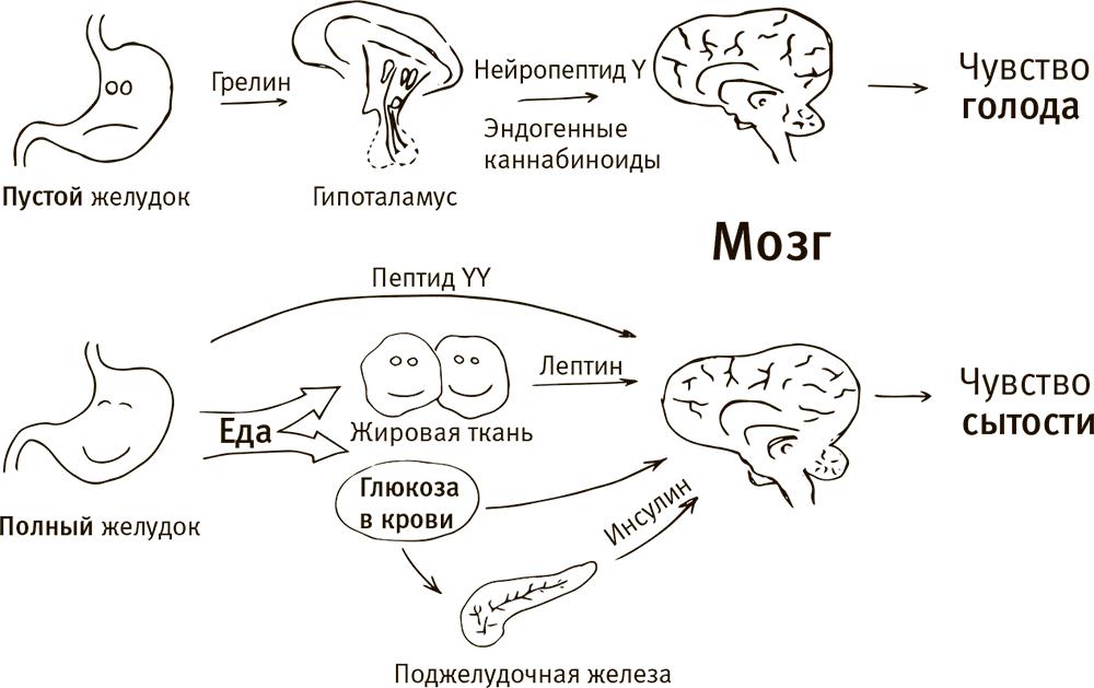 Как мозг заставляет нас делать глупости