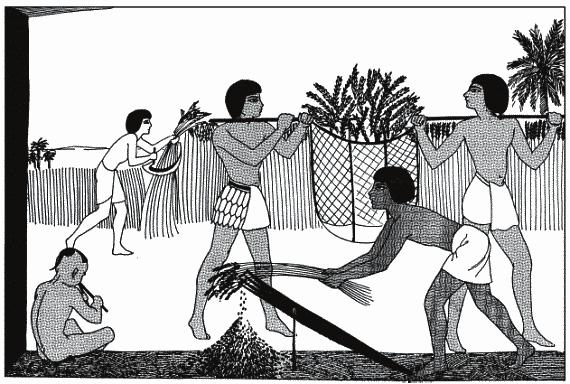 sport-v-drevnem-egipte-krupnie-foto-mamok