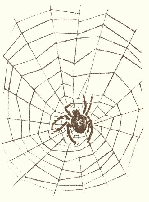 Но вернемся к нашему пауку.