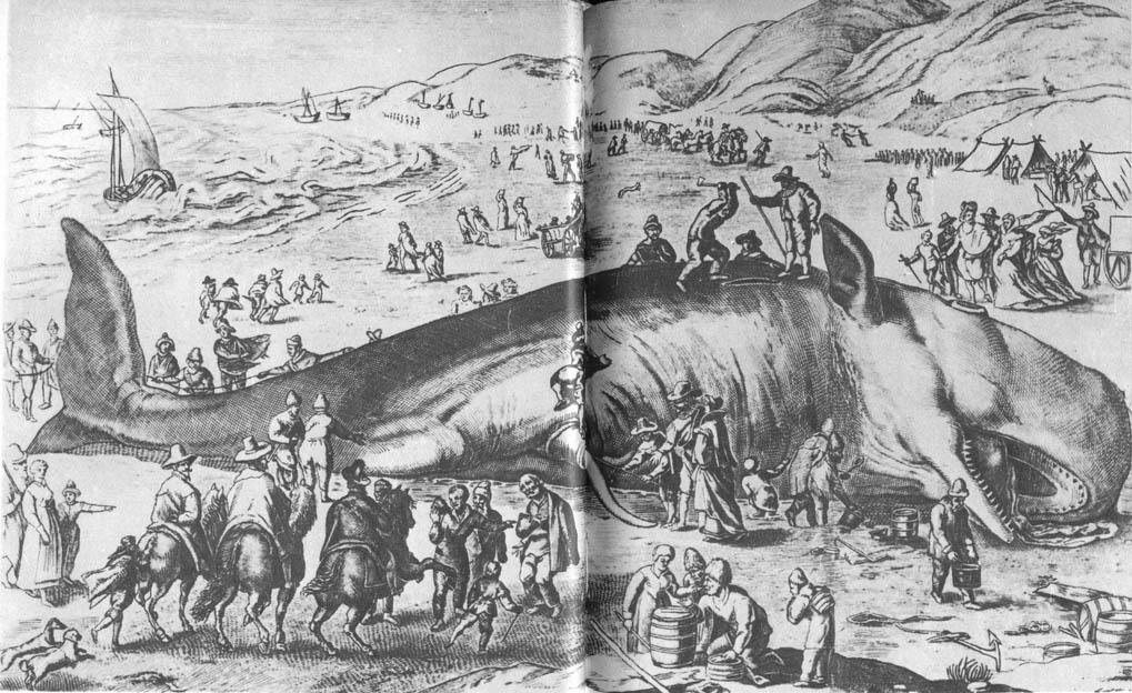 американский моряк был в чреве кита