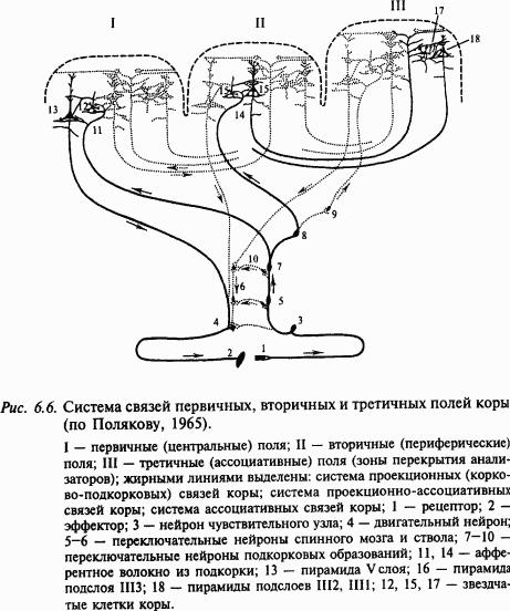 Книга: Основы нейрофизиологии