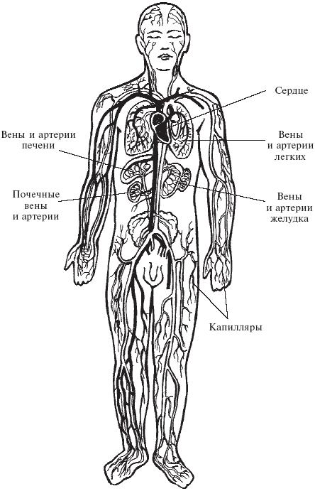 Оздоровление сосудов и крови