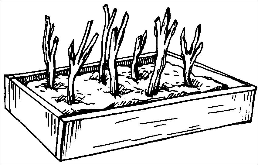 Книга Хризантемы, астры, георгины и другие осенние цветы