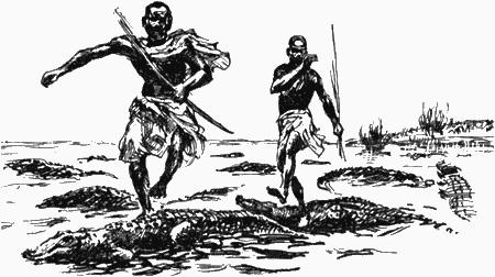 Африка — земля парадоксов