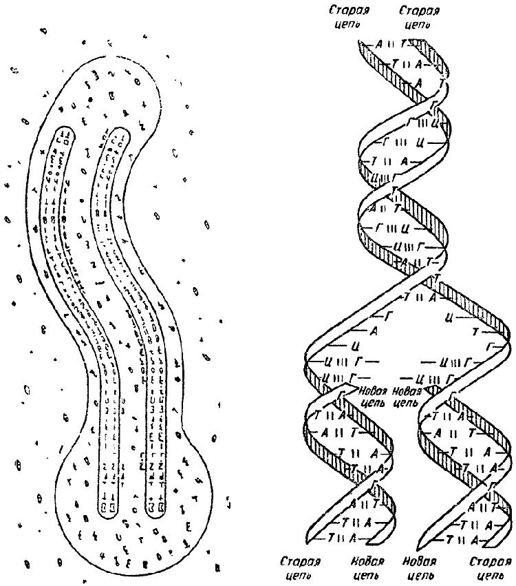 Книга: Дарвинизм в XX веке