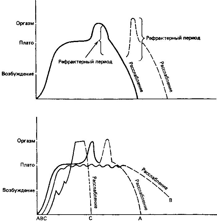 Фазы полового цикла и модель активации сексуальных реакций