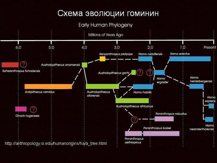 Происхождение и эволюция